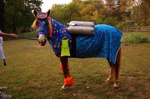 horse swim